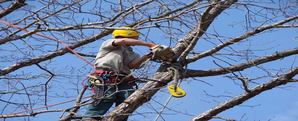 All Tree Trimming Companies Aren't Created Equal